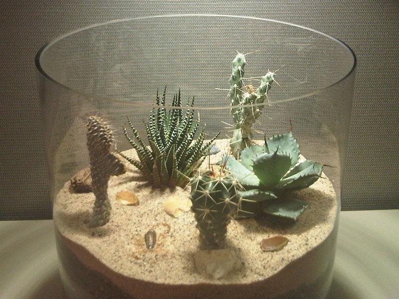 mini cactus terrarium images. Black Bedroom Furniture Sets. Home Design Ideas